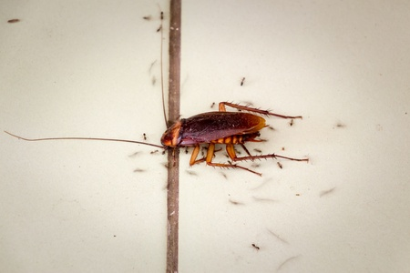 Beating Down On Ants, Roaches, And Fleas