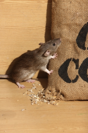 Pest Control: Getting Rid of Those Pesky Rodents