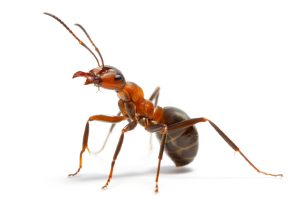 Pesky Pests That Can Damage Your Home, Part 2